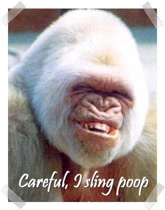 white ape - careful i sling poop