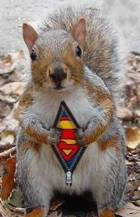 superman squirrel