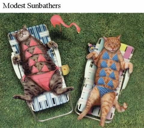 cats in binkis modest sunbathers