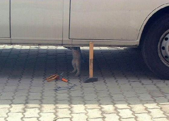 mechanic cat works on car