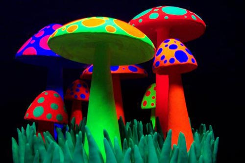 bright mushrooms