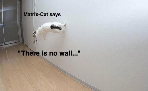 matrix cat says there is no wall