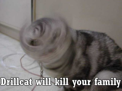 drillcat will kill your family