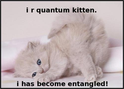 i am quantum kitten i have become entangled