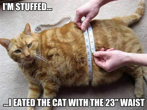 i'm stuffed i ate the cat with the 23