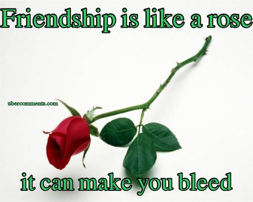 Friendship is like a rose it can make you bleed