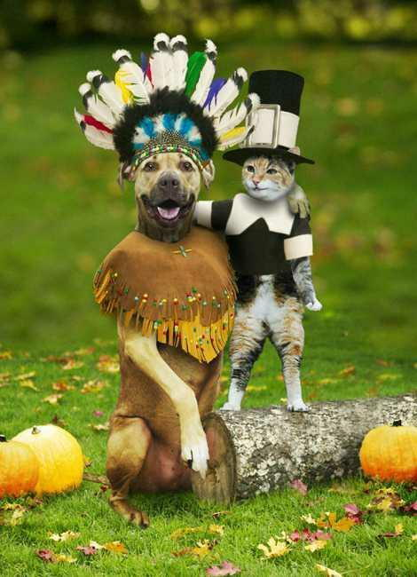 native american dog pilgrim cat