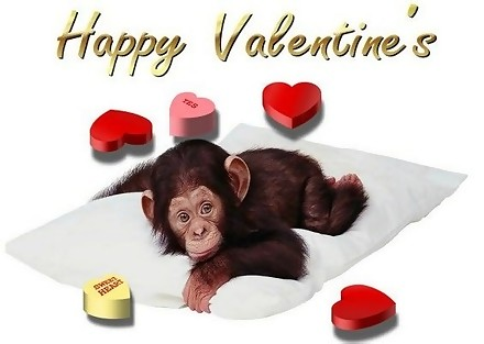 happy valentines monkey
