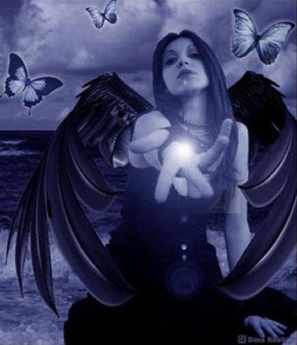 dark angel butterflies