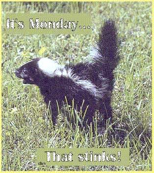 its monday that stinks skunk