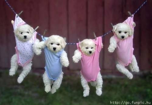 dogs on a clothes line
