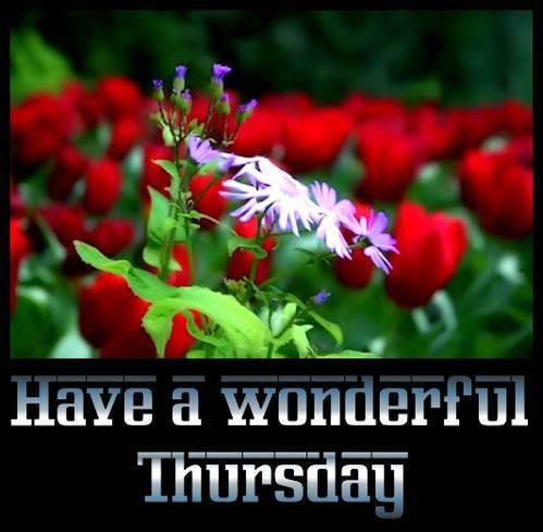 Have a wonderful Thursday