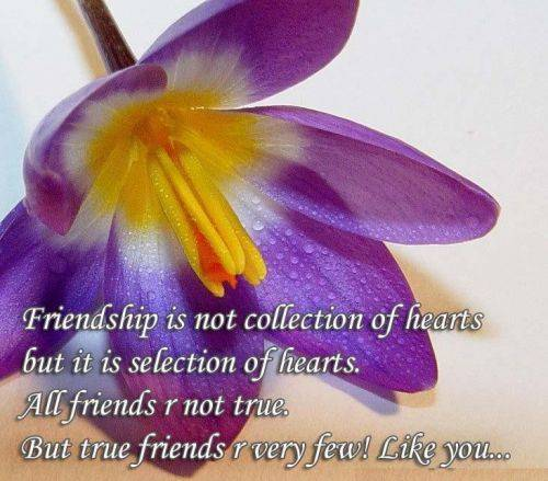 Friendship is not collection of hearts but it is selection of hearts