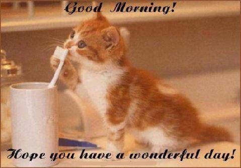 Good Morning! Hope you have a wonderful day!