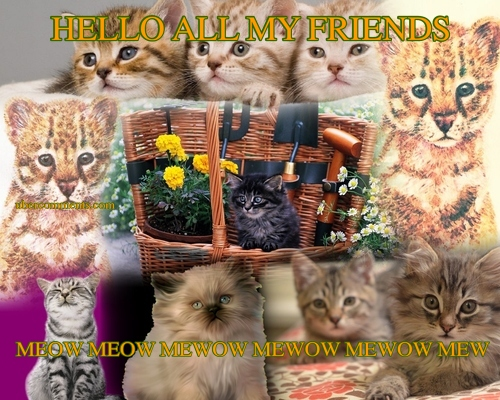 HELLO ALL MY FRIENDS MEOW MEOW MEWOW MEWOW MEWOW MEW