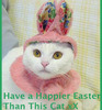 have a happier easter than this cat