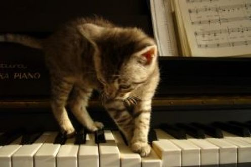 Image result for Cat Playing Piano