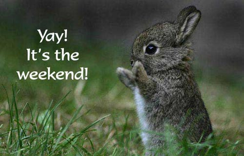 yay its the weekend bunny rabbit