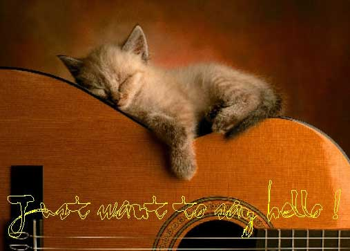 just want to say hello kitten sleeping on 