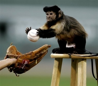 monkey plays baseball