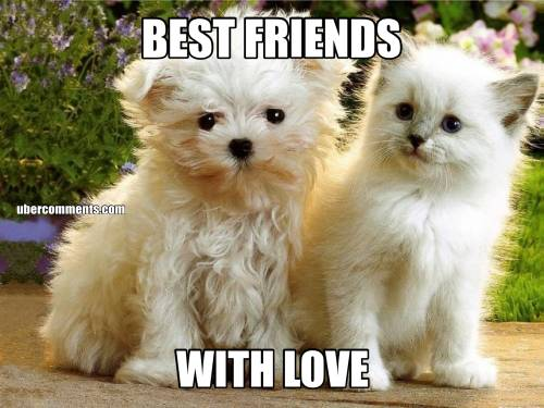 BEST FRIENDS WITH LOVE