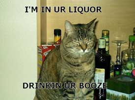 i'm in your liquor drinking your booze cat