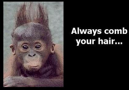 Monkey always comb your hair