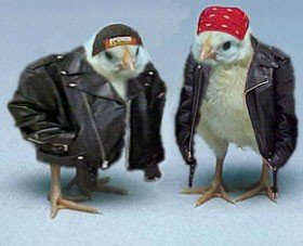 baby chickens in leather jackets