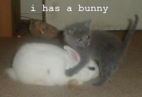 cat has a bunny rabbit