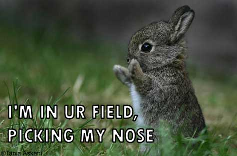 bunny rabbit in your field picking nose