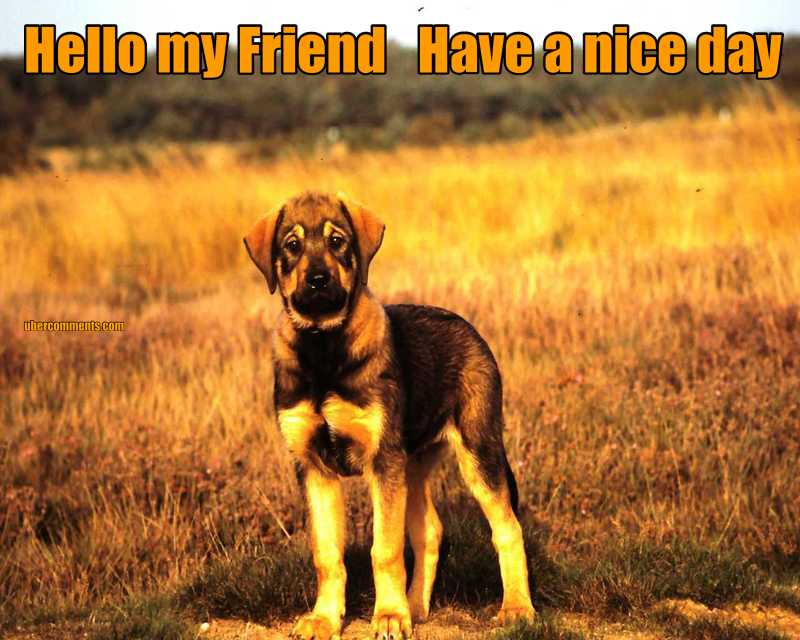 Hello my Friend   Have a nice day