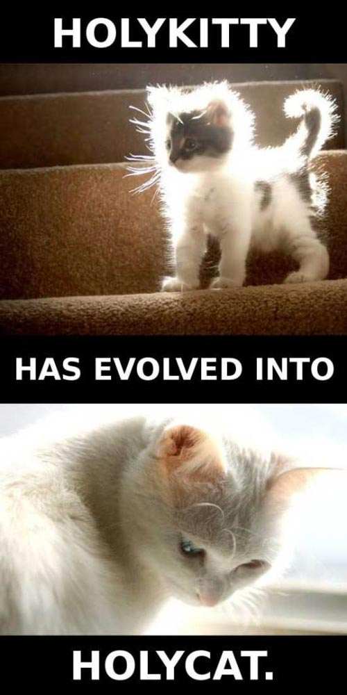 holy kitty has evolved into holy cat