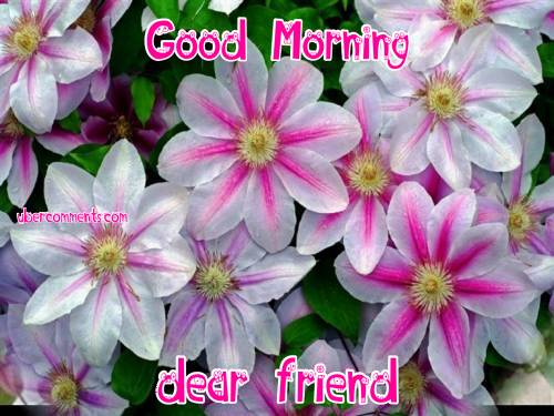 Good Morning dear friend