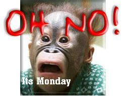oh no it's monday monkey
