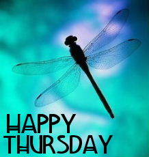 happy thursday dragonfly