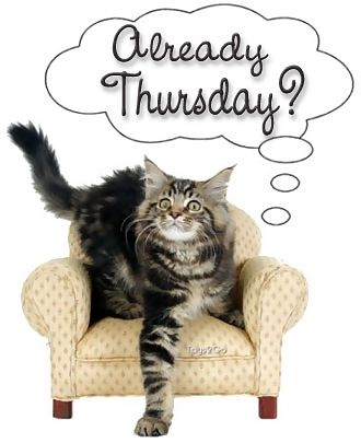 already thursday cat