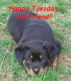 Happy Tuesday My Friend Dog Tuesday Graphics For