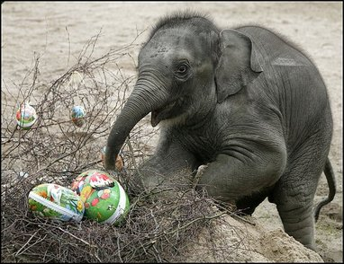 elephant easter eggs