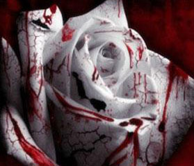 bloody white rose