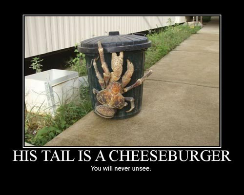 his tail is a cheeseburger