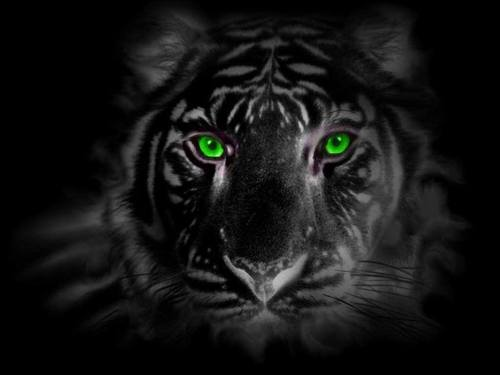 green eyed tiger