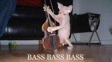 hairless cat plays violin