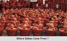 Where babies come from? babies in flower pots