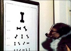dog eye chart with bones