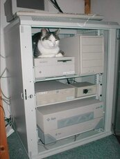 cat sitting in server