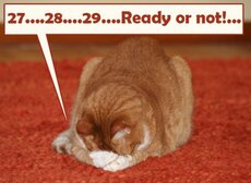 cat counting 2