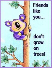 friends like you don't grow on trees koal bear