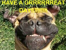 have a great day dog