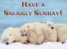 have a snuggly sunday polar bears