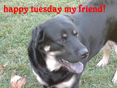 Ruben,happy,tuesday,friend